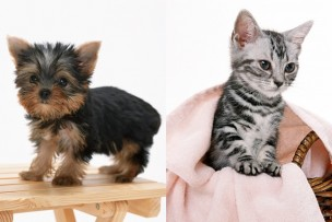 犬と猫の画像